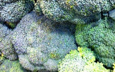 Juicing Broccoli Helps Patient Beat Bladder Cancer
