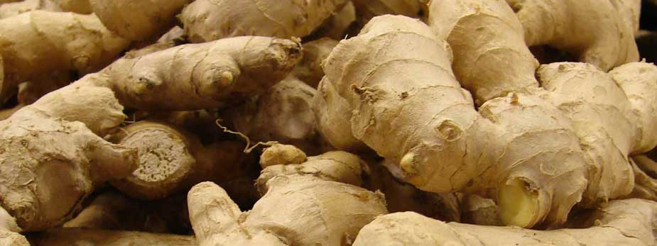 Ginger May Protect The Brain From MSG Toxicity