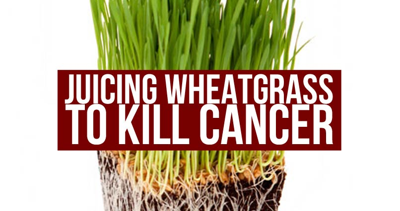 Juicing Wheatgrass To Kill Cancer