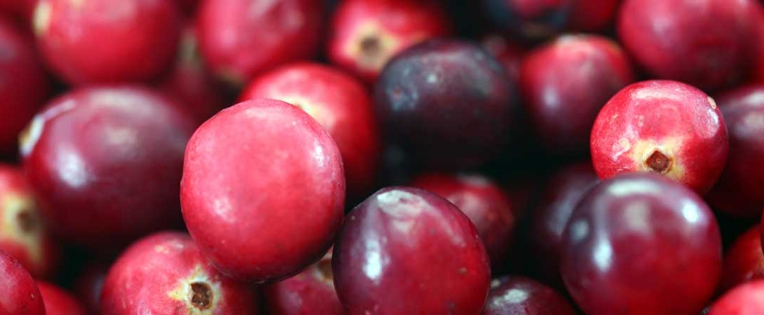 Cranberries – Not Just a Sauce for the Christmas Turkey